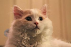 Apollo - Our little one by LindaPotet