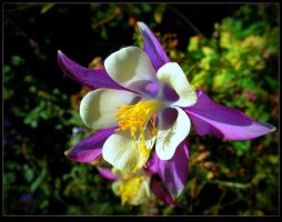 Last days of the Columbines by JocelyneR