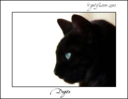 Dugite - Cat Portrait - 1 of 4 by Renilicious