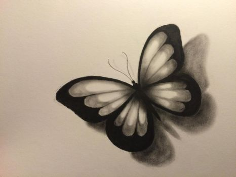 Butterfly close up  by Drawlover
