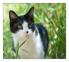 Abby in the Grass by kalany