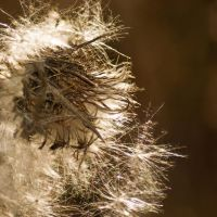 MIL11030-MACRO TEXTURE COLLECTION by LucidPhoto1976