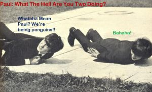 beatle Penguins. by monieo