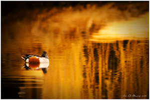 On Golden Pond by kkart