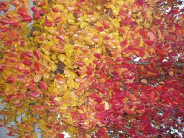 Red and Yellow Leaves by FridayNinja