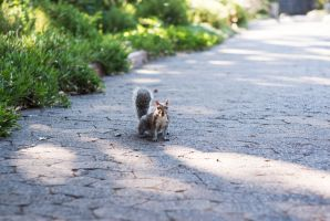 Squirrel by Jessicahphotography