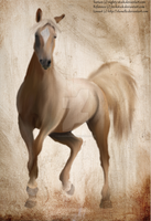 Palomino Speed Painting by EquineRibbon
