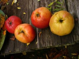 Fall - Apples by Psychic-Keraina