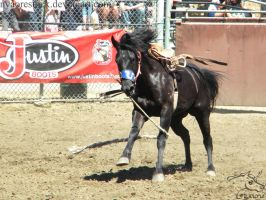Rowell Ranch Rodeo - 16 by Nyaorestock