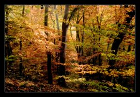 autumn in bavaria no.10 by Hartmut-Lerch