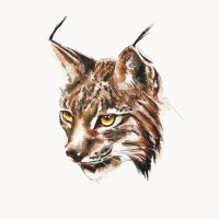 Lynx (Study) Created with watercolour and coloure by estherproductos