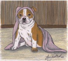 Bulldog Puppy by malane3