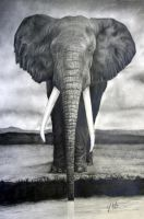 Elephant by FatCatDesigns