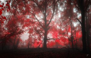 -Where passion grows- by Janek-Sedlar