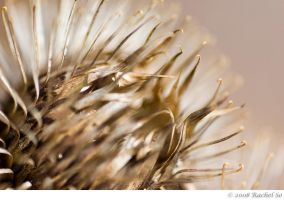 Thistle Brown II by butterfly36rs