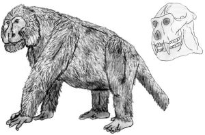 Muanapithecus by Zimices