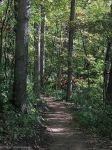 Forest Trail 1 by VisionsSeen