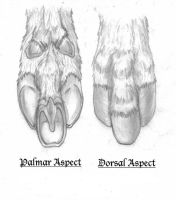 Three Toed Hoof Concept by RussellTuller