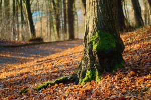 Roots by the way by PhotoDragonBird