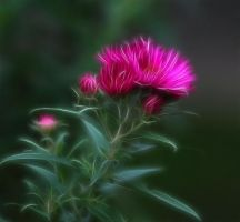 Aster, Day 281 by Anarzer