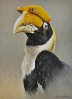 GREAT HORNBILL 16 by 12 inches Oil on Panel by chandlerwildlifeart