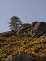 Twins over the hill by bellaricca
