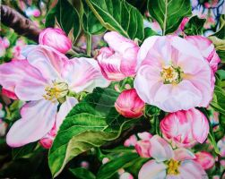 Apple Blossoms by KellyEddington
