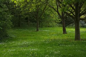 Meadow_2014-05_0001 by akio-stock