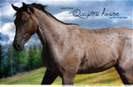 Quarter horse by Fealwen