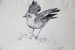 hedge sparrow by cola93