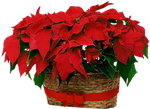 ChristmasFlowers by KmyGraphic