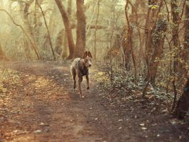 Forest Dawn Hound by HuXen