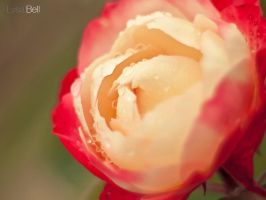 Soft Smooth by Lysa-Bell
