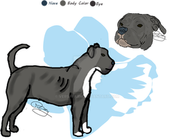 Chaos: Pit Bull Refrence by VersaFarm