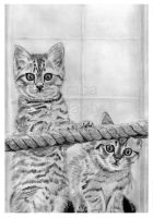 The Two Pussy Cats by jolabrodnica