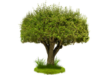 Tree Png Hy by Moonglowlilly