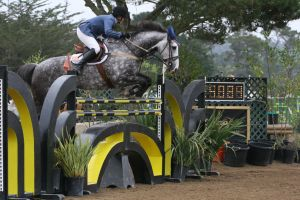 Dapple Gray Warmblood Grand Prix Jumpers by HorseStockPhotos