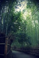 sagano bamboo forest by l337Jacqui