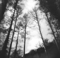 Tall Trees by TheNewBlueBlood