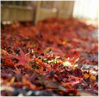 flo floor maples by jyoujo