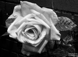 Gothic Rose by mkIndustrial