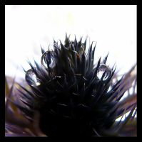 little thistle by tulien