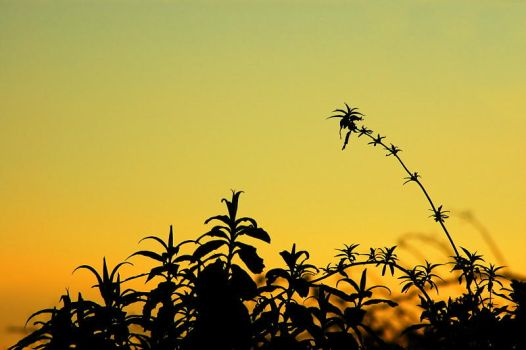 Sunset Over Hedge-row by brendangillatt