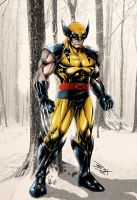 Wolverine Final Colors 2 Net by brianb3x
