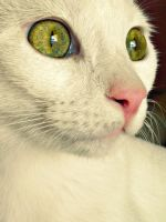 Eyes from another world. by Catist