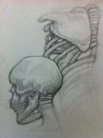skeleton study. by sproutwitch
