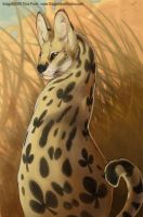 Serval - Nine of Clubs by mirroreyesserval