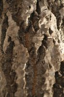 Bark Texture 2 by Stickfishies-Stock