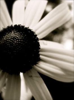Black and White Close-up by laceyyy