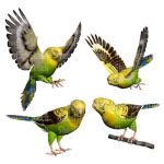 Yellow Budgie Bird Stock Pack 1 by Shoofly-Stock